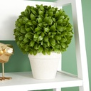 Buxus Leaf Ball in Pot 12in