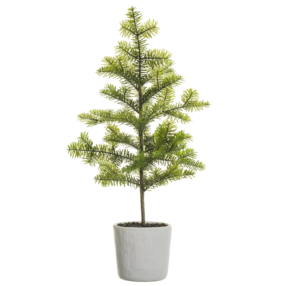 Pine Tree in MGO Pot 38in
