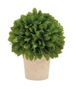 Buxus Leaf Ball in Pot 10in